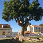 Portugal Forever - Der Ortskern von Almada